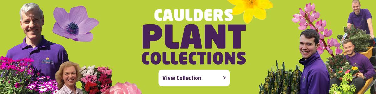 caulders-plant-collection-image