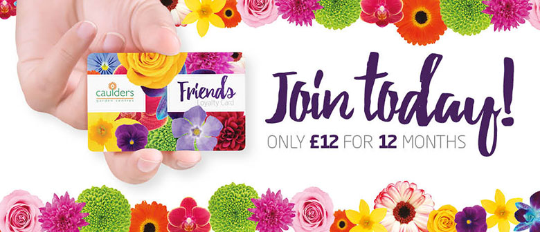 friend-card-collateral-slider