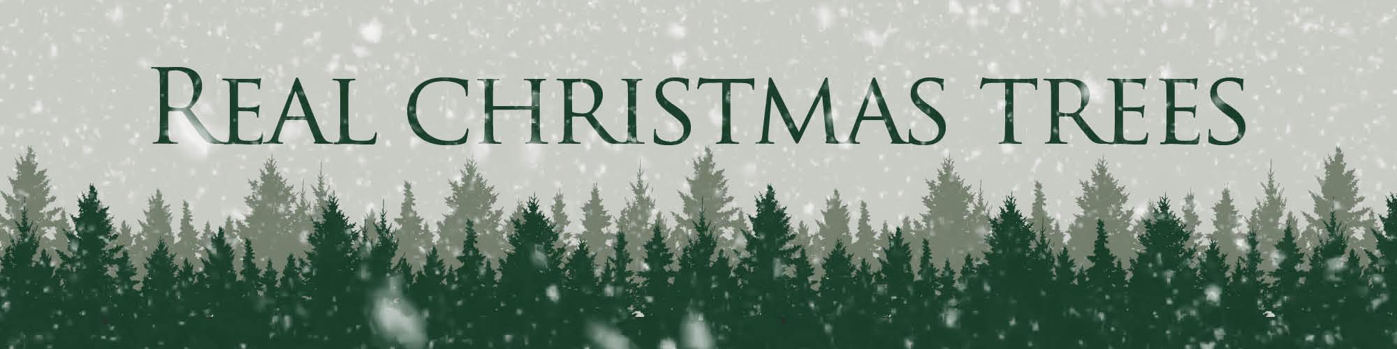 real-christmas-tree-slider